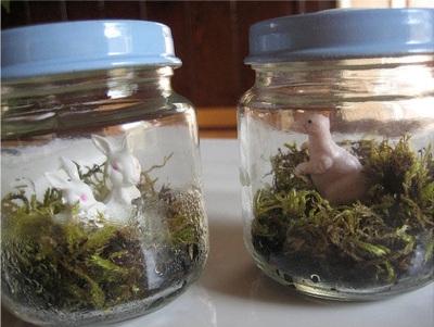 Terrarium dalam toples bekas