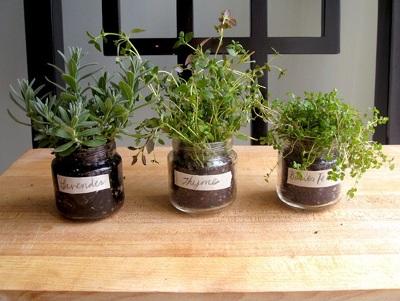 Gunakan toples bekas sebagai tempat menanam rempah dan herbal.